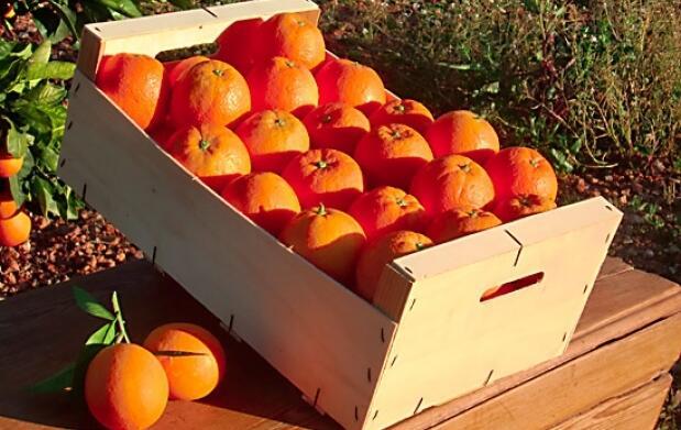 Caja de naranjas o mandarinas valencianas