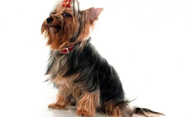 Pon guapo a tu perro