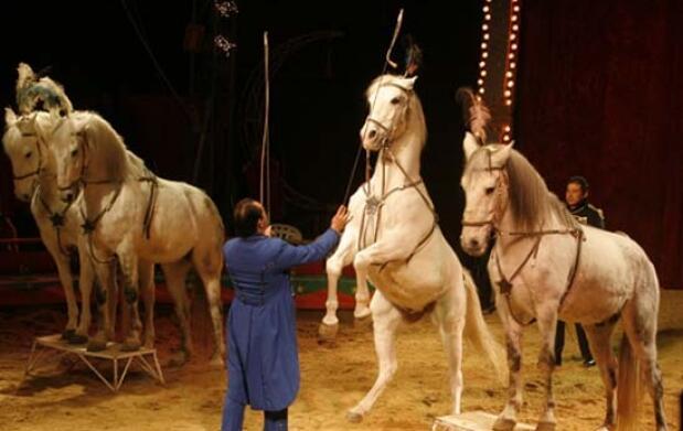 Entradas Gran Circo Holiday