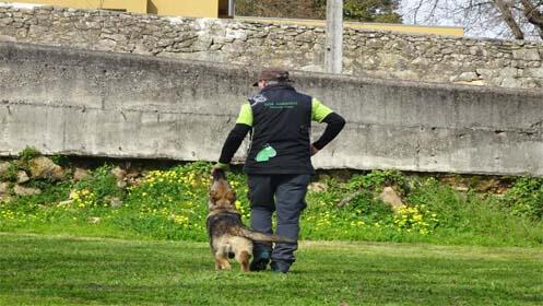 Clases de modificación de conducta canina a domicilio
