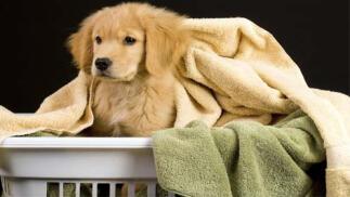 Spa canino con ozonoterapia