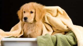 Autoservicio baño para mascotas