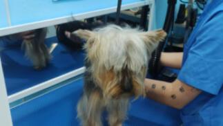 Baño completo y peluquería para tu mascota
