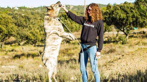 Curso intensivo de 15 días para mejorar la conducta y convivencia con tu perro