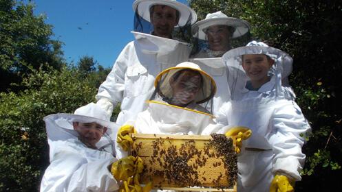 Pasa una jornada inolvidable rodeado de naturaleza y sintiéndote apicultor por un día