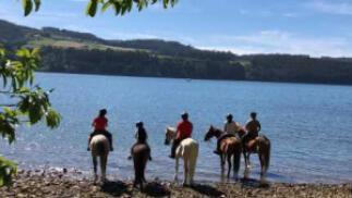 Paseo en pony, ruta a caballo o clases de equitación