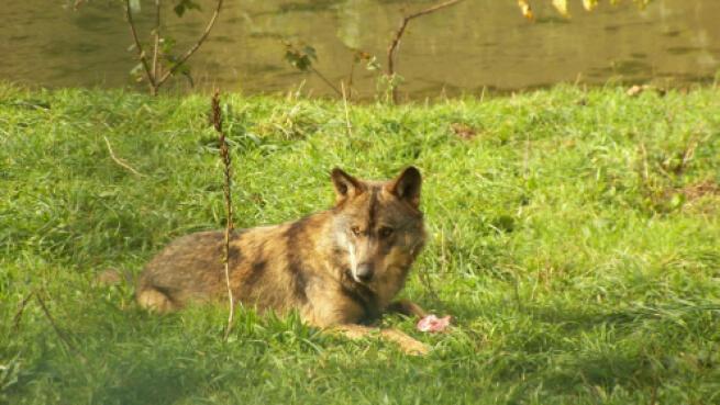Visita guiada a La Casa del Lobo